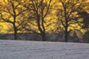 Thumbnail Snowy sunrise
